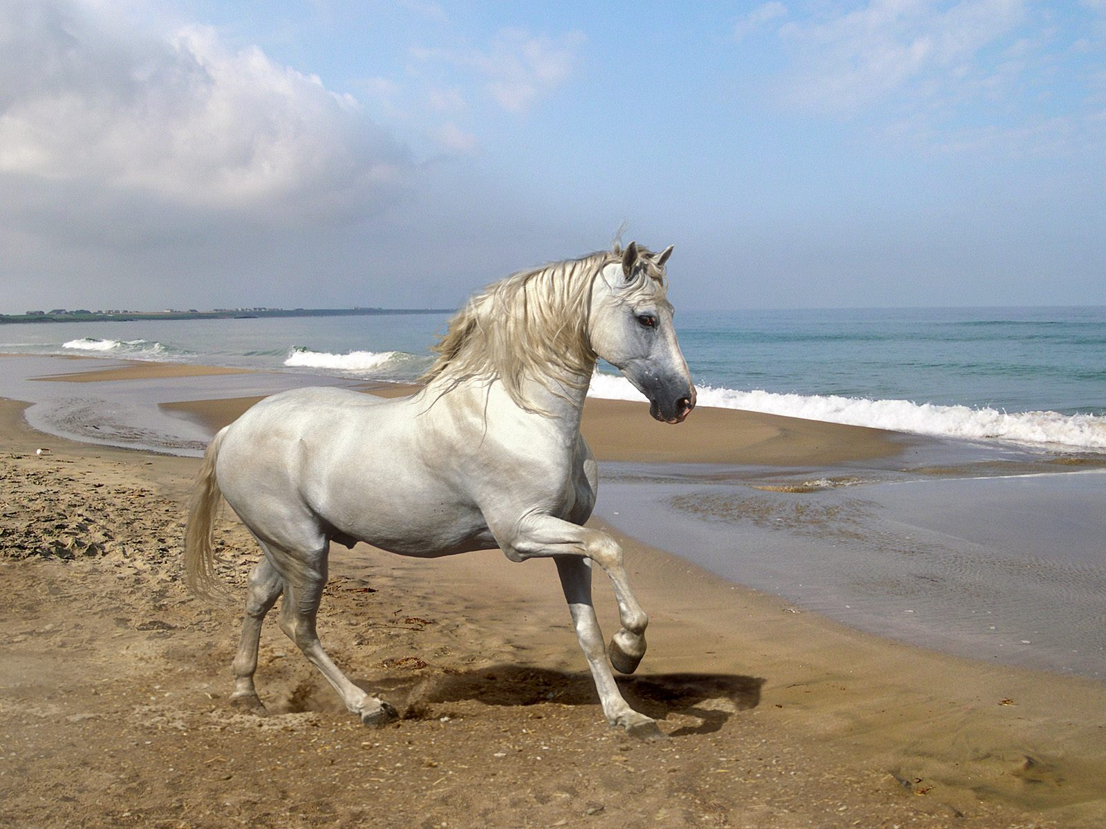 Grey Andalusian by the Sea.jpg
